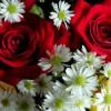catia-fiori