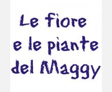 le-fiore-e-le-piante-del-maggy