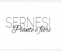 sernesi-piante-e-fiori